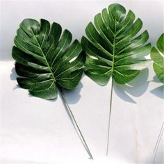 Description: Green Artificial Monstera Palm Spray Fern Leaf Plant Tree Branch Wedding Decor Smooth surface and bright color design looking like the real leaf. Perfect for restaurant hotel museums chur Barbados, Trees To Plant, Plant Leaves, Garden Trees, Green Leaves, Puerto Rico, Bright Wedding Flowers, Green Wedding, Party Wedding