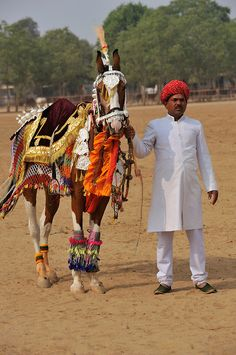 Display of dancing horses at the 81st eEndurance event, Dundlod, Rajasthan, India