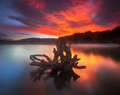 Elemental Rebirth by ~Dee-T    taken at Lake Manapouri, New Zealand