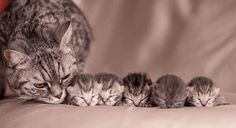 Post with 1 votes and 31784 views. Mother Cat With Her Kittens Cute Cats And Kittens, I Love Cats, Crazy Cats, Kittens Cutest, Pretty Cats, Beautiful Cats, Animals Beautiful, Baby Animals, Funny Animals