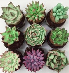 16 Cakes That Will Deeply Satisfy Anyone Obsessed With Succulents - Succulent cupcakes 😍 need to work out a step-by-step for how to make these! Credit to for these - Fondant Cupcakes, Kaktus Cupcakes, Succulent Cupcakes, Cupcake Cakes, Cupcake Toppers, Cupcakes Kids, Fondant Toppers, Cupcake Liners, Creative Cake Decorating
