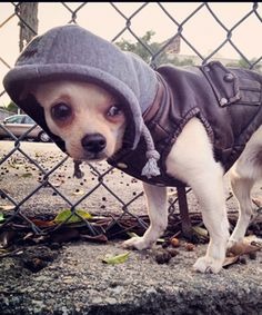 Look at this Hip Doggie Brown Vintage-Style Bomber Jacket on #zulily today!