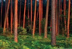 Białowieża Forest You Are Beautiful, Europe, Fire, Earth, Vacation, Places, Homeland, Image, Google Search
