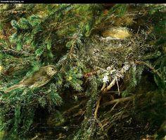 bruno liljefors taltrast vid boet