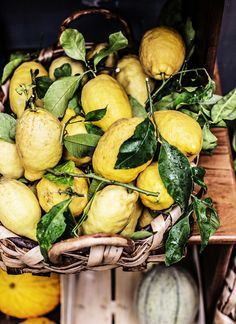 lemons in capri.  katie quinn davies you rock