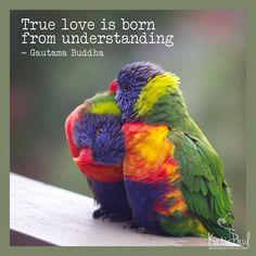 """True love is born from understanding.""  ― Gautama Buddha #1000speak"