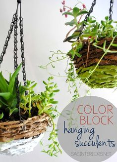 Pre-made succulent hanging basket from Lowe's jazzed up with paint to create a unique Color Block Succulent Basket {EASY DIY}