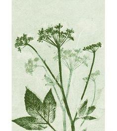 Botanisk tryk Groundelder A5 - Pernille Focarelli