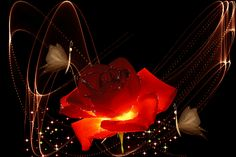 Sparkling Red Rose flowers rose bouquet red rose for you flowers for friend animated flowers flower graphics flower gifs animated flower