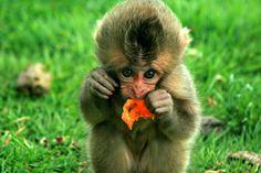 baby mokey