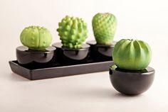Sono tornati per le Vs idee regalo di Natale, i diffusori di fragranza a forma di Cactus e fiori, realizzati in ceramica da Natura Oggi, Torino. Accompagnati da una vasta scelta di profumazioni, 100% Naturali, Senza alcool, TUTTI DA SCEGLIERE! http://growingconceptstore.it/prodotto/diffusore-di-fragranza-natura-oggi-cactus-fiore-rosa-col-bianco/