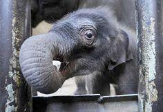 baby_elephant.jpg 320×222 pixels