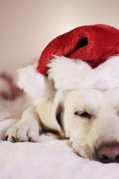 #dog #puppy #love #christmas