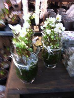 Julerose med mose Terrarium, Plants, Home Decor, Terrariums, Decoration Home, Room Decor, Plant, Home Interior Design, Planets