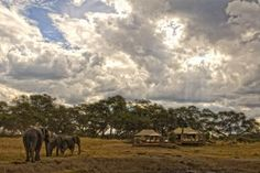 Hwange Elephants – Securing their future - http://www.zambezitraveller.com/hwange/conservation/hwange-elephants-–-securing-their-future