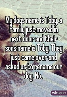 My dogs name is Toby, a family just moved in next door and their sons name is Toby. They just came over and asked us to rename our dog. No.