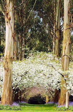 Eucalyptus Forest, New Zealand looks like a cross between a Christmas light show and a fairy land.