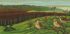 Redwings on rodborough common by Wildlife artist Amanda Bradbury Wildlife Paintings, Local Artists, Bird Art, Landscape Art, Habitats, Amanda, Landscapes, Art Gallery, Birds