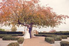 Newlyweds under tree at Froyle Park wedding photographs. Photography by one thousand words wedding photographers