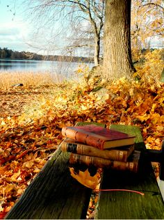 books and cozy autumn  (Original photo by autumn cozy - http://autumncozy.tumblr.com/post/57187446842/autumn-books# - via kissabookworm)