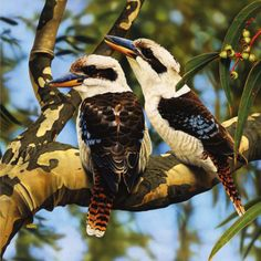 a tree kingfisher native to Australia and New Guinea and found from humid forest to arid savanna.its loud distinctive call is widely used as a sound effect in jungle or bush settings Animals Of The World, Animals And Pets, Cute Animals, Beautiful Birds, Animals Beautiful, Australian Animals, Bird Pictures, Wild Birds, Bird Art