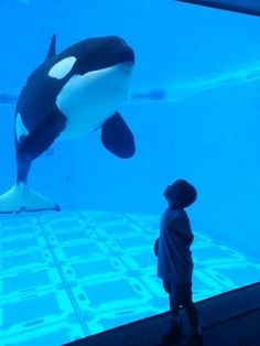 Christine L. captured this AMAZING moment of her son Jamey enjoying his first visit to SeaWorld Orlando.