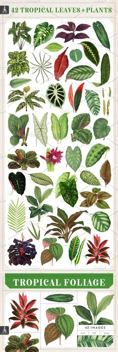 42 tropical foliage illustrations perfect for invitations, web graphics, posters, patterns and more. These amazing antique botanicals will accompany your work Tropical Leaves, Tropical Plants, Hand Images, Side Garden, Tropical Design, Foliage Plants, Leaf Flowers, Garden Inspiration, Tattoo Inspiration