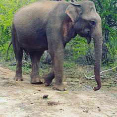 Sri Lanka, Elephant, Tours, Instagram Posts, Nature, Travel, Animals, Countries, Naturaleza