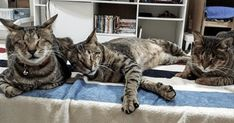 3 Blind Cats Were Unwanted for a Long Time Until a Kind Human Stepped in and Adopted Them
