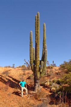 Valle de los Gigantes en Mexicali Baja California