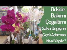 Orkide bakımı budama ve çiçek açtırma. Orchid care ; repotting & trimming dead roots - YouTube