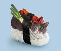 SUSHI CATS, la nueva tentación gatuna a la que no podrás resistirte La compañía Tange and Nakimushi Peanuts bendice internet con sus gatetes mágicos sobre lechos de arroz