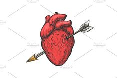 Human heart with arrow tattoo etching by vectortatu on Creative Market - Human heart with arrow tattoo etching by vectortatu on Creative Market - Arrow Tattoos, Dog Tattoos, Cute Tattoos, Tattoo Drawings, Small Tattoos, Human Heart Tattoo, Human Heart Drawing, Love Heart Tattoo, Larry Stylinson