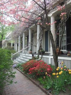 Wisteria in bloom on Cambridge Street by angelica