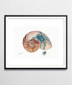 Sea Shell Spider archival watercolor print by ArtistWatercolor, $20.00
