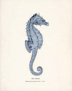 Vintage Seahorse Print