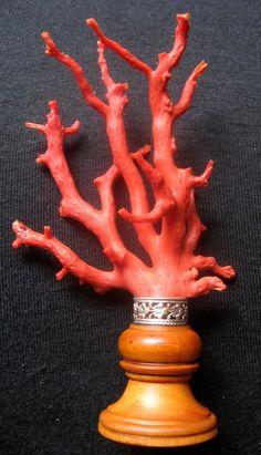 Branche De Corail Rouge Sur Socle En Bois(buis), 19éme Siècle, Le Festival des Cannes, Proantic