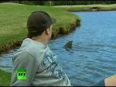 Ok, seriously???  This has confirmed my worst fears!  I was always told that I was silly to be scared of lakes because sharks don't live in them...well, here's your proof people!!!!!