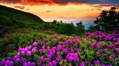 HD Nature Wallpapers Most Beautiful Nature HD Images Wallpapers Beautiful Nature Spring, Beautiful Nature Wallpaper, Spring Nature, Amazing Nature, Beautiful Scenery, Beautiful Landscapes, Beautiful Flowers, Beautiful Pictures, Spring Wallpaper Hd