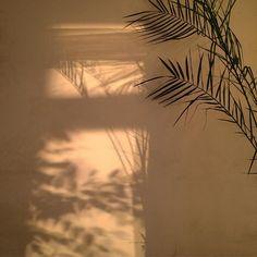 aesthetic brown beige golden hour minimalist shadow wallpapers soft deja aesthetics instagram plk vu disgusting nothing last kata coretan amarti