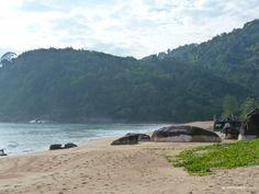 Tioman island, Malaysia, Juara Turtle Project #idowhatiwanto