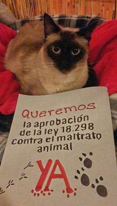 No al maltrato animal!!