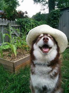 This gardener tending to his plants. | 61 Images Of Animals That Are Guaranteed To Make You Smile