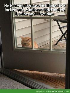 Whtat a cute #cute cats #Baby Cats  http://babycutelittlecat...