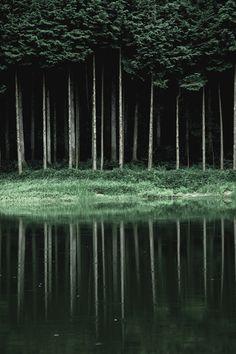 Tynde træer med tæt krone foran sø