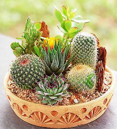 desert dish garden | Cactus Dish Garden from 1-800-FLOWERS.COM-1828