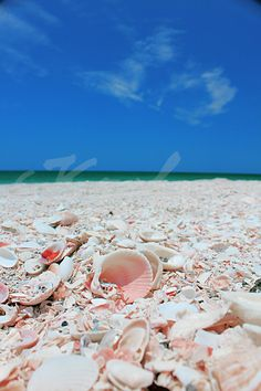 Siesta Key, Florida - great shells. Cool white powdered sugar sand. Gorgeous gulf Fla. beach