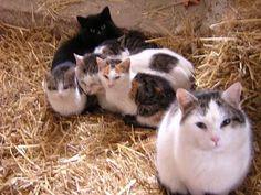 Katzen am Bauernhof Animals, Pictures, Entlebucher Mountain Dog, Cats, Pet Dogs, Photograph Album, Animales, Animaux, Animal