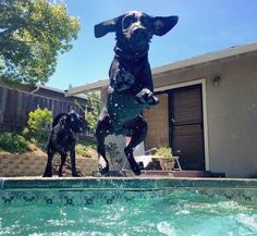 Funny Photos Of Adorable Animals In A Swimming Pool To Make Your ...