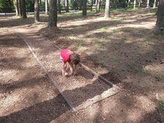 """Alla scoperta di uno dei parchi divertimento naturali più innovativi, che risveglia i sensi """"dalla testa ai piedi"""" grazie al contatto con la natura"""